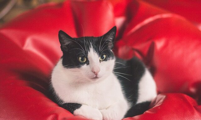 Kot terapeuta, czyli felinoterapia