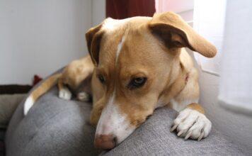 Czy psy mają sny?