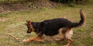 Zabawa z psem na świeżym powietrzu