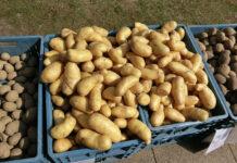 ile gotować ziemniaki